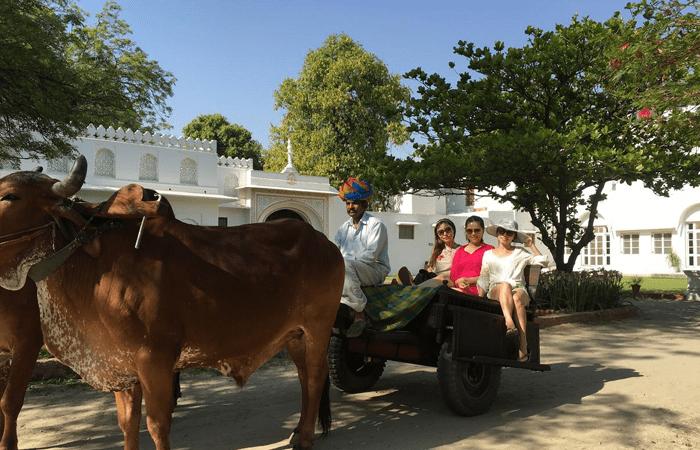 bull-cart